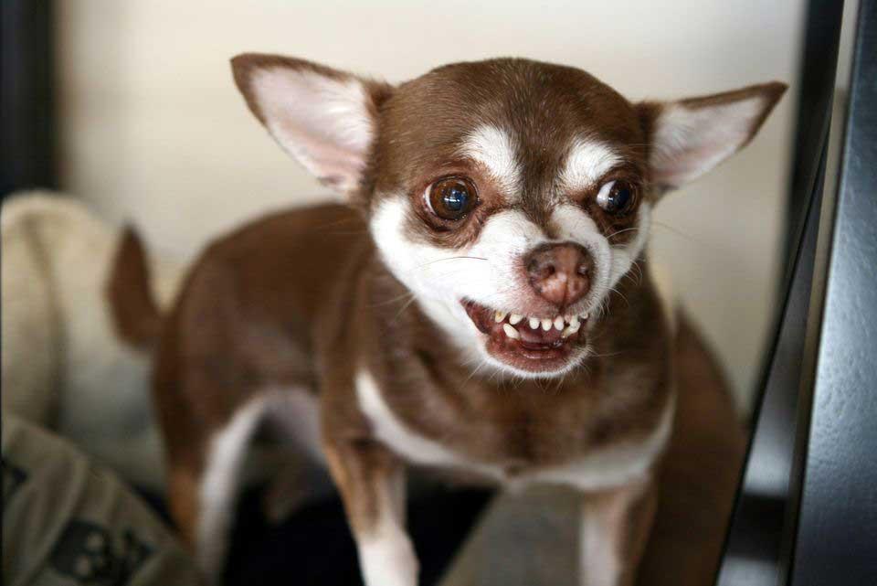 Beteendeproblem hos hundar