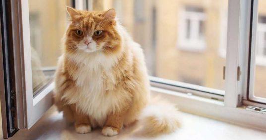 Katt-diabetes